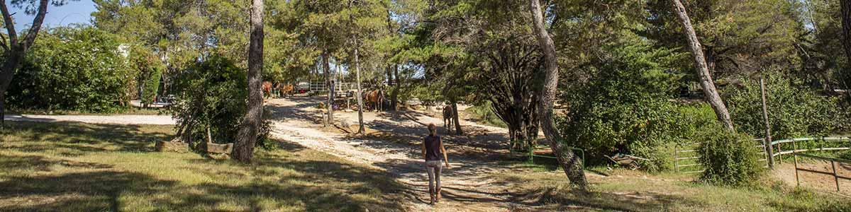 domaine-du-reganel-centre-equestre-domaine-equitation-ethologie-les-matelles-herault-05