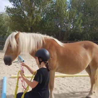 Stages poney et cheval pour vos enfants pendant les vacances de Toussaint