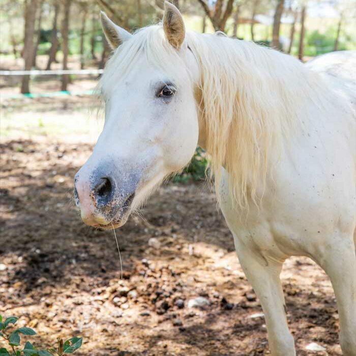 domaine-du-reganel-centre-equestre-domaine-equitation-ethologie-les-matelles-herault-aster
