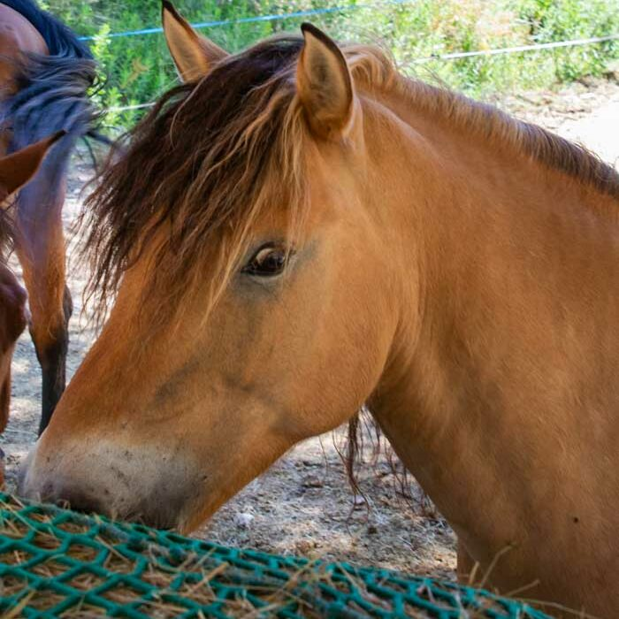 domaine-du-reganel-centre-equestre-domaine-equitation-ethologie-les-matelles-herault-hoffman