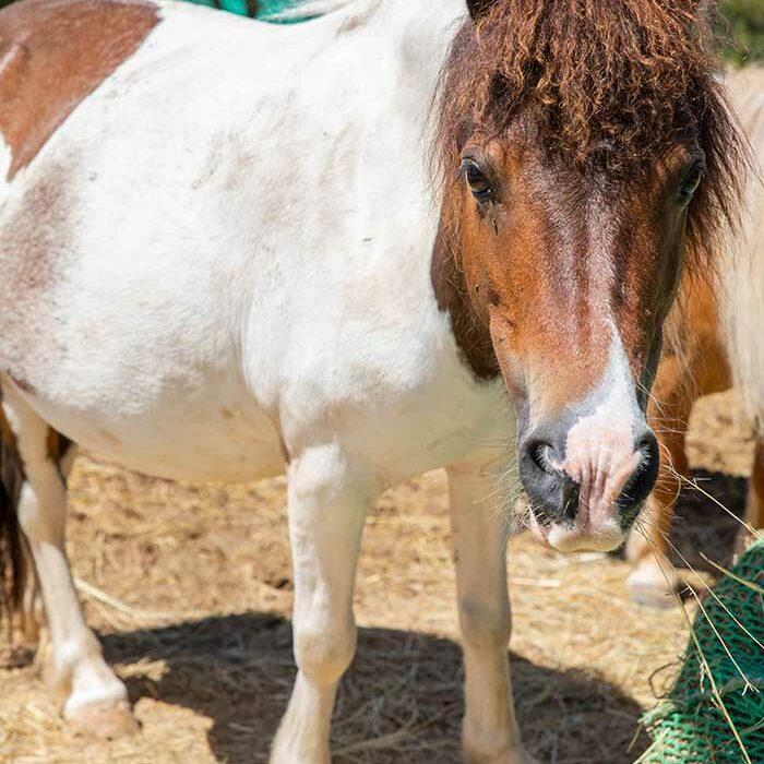 domaine-du-reganel-centre-equestre-domaine-equitation-ethologie-les-matelles-herault-sisca