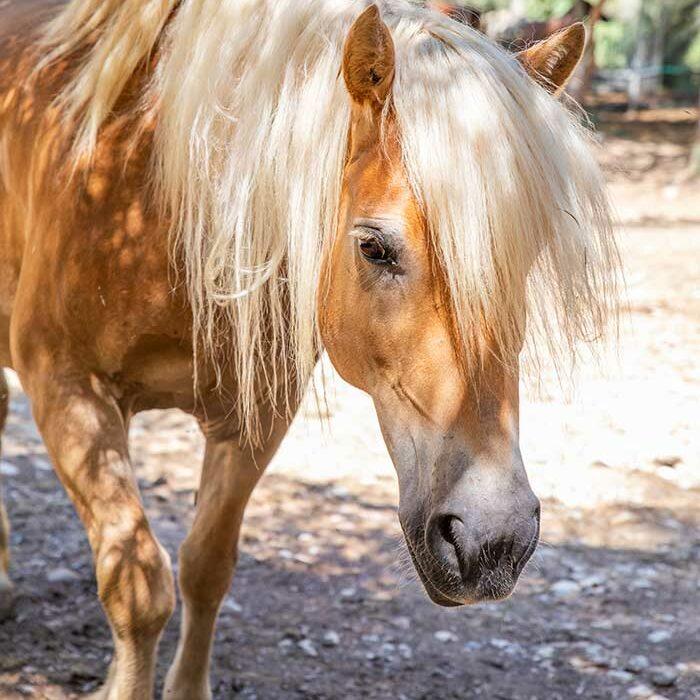 domaine-du-reganel-centre-equestre-domaine-equitation-ethologie-les-matelles-herault-valesca
