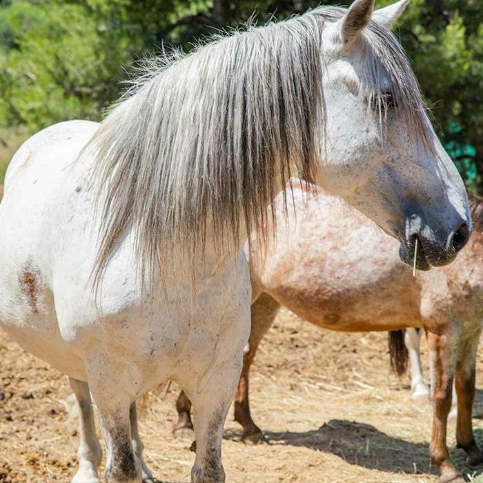 domaine-du-reganel-centre-equestre-domaine-equitation-ethologie-les-matelles-herault-viaduc